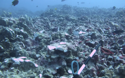Anchor and chain damages 431 coral colonies